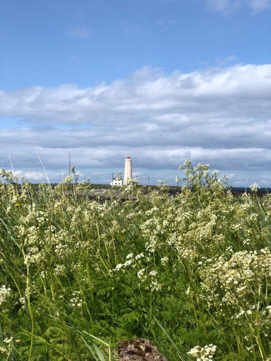 The lighthouse at the edge of the Seltjarnarnes peninsula